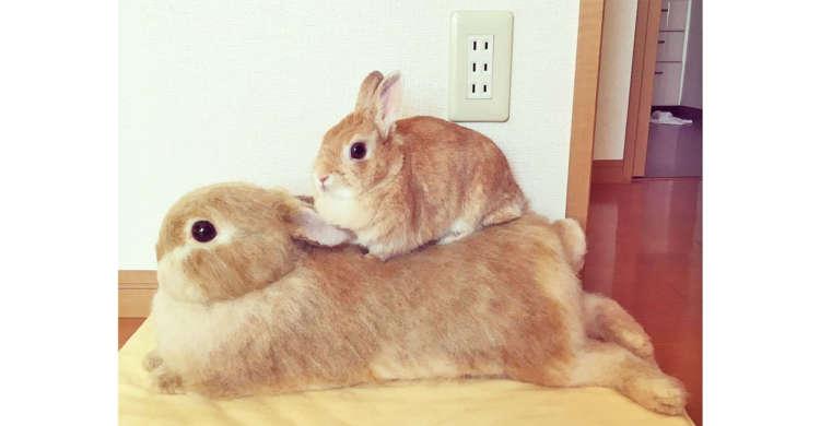 【どっちが本物? 】マッタリくつろぐウサギの親子。しかし…よく見てみると、実は片方は人形なんです♡