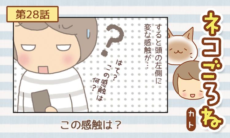 【まんが】第28話:【この感触は?】まんが描き下ろし連載♪ ネコごろね(著者:カト)