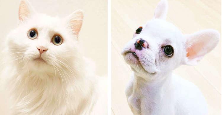 【白さにうっとり♡】3月14日はホワイトデーなので …真っ白なワンニャンに集合してもらいました!^^
