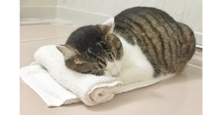 飼い主さんが丸めた『タオル枕』を、使いこなす猫♡ 幸せそうな寝姿に…心がポカポカする(*´ω`)6枚