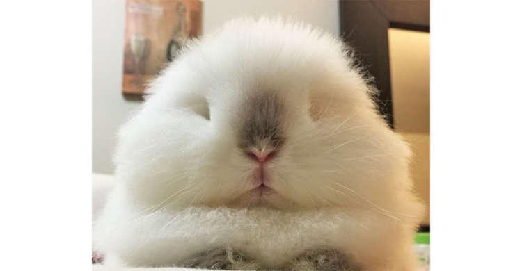 【一度見たら忘れられない♡】真っ白でフワフワなウサギさん。不思議な魅力から目が離せないッ!