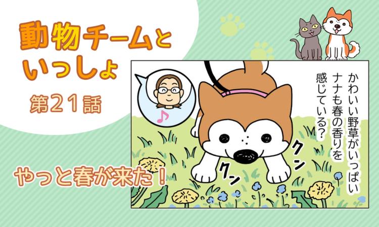 【まんが】第21話:【やっと春が来た!】描き下ろし漫画♪「動物チームといっしょ」(著者:月田エミ)