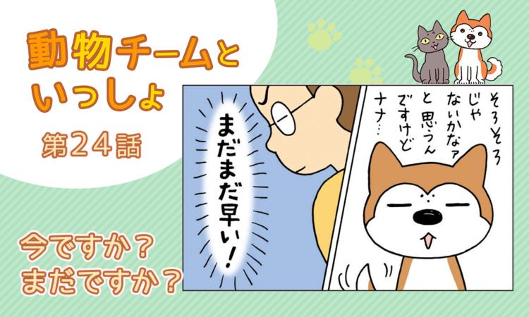 【まんが】第24話:【今ですか?まだですか?】描き下ろし漫画♪「動物チームといっしょ」