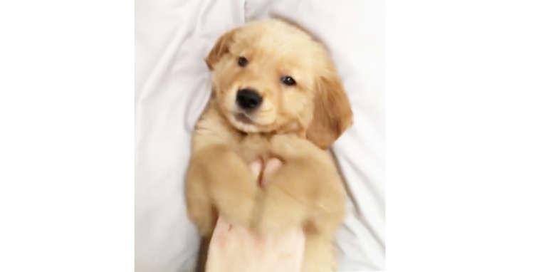 【初めてのナデナデ♡】お家にきたばかりの子犬をナデナデしたら…極上のとろけ顔をみせてくれた(´ω`)