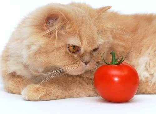 猫にトマトを与えるメリットとデメリット