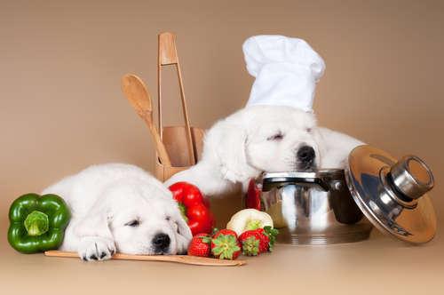 犬にパプリカを与えるメリットと注意点