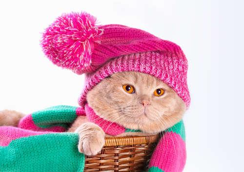 猫が寒い時にする行動とは?  猫の「寒い」のサインと防寒対策