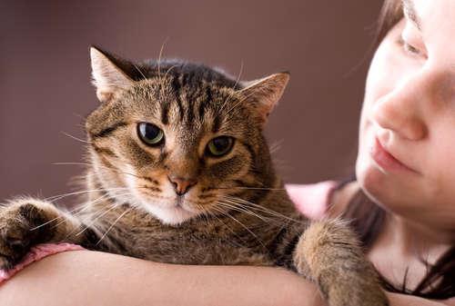 猫の急性胃腸炎 考えられる原因や症状、治療法と予防法