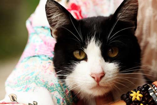 猫の後ろ足が麻痺したり、ふらついたりする心筋症の症状や治療法