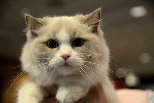 猫の元気がない。カリウムの過不足を原因として発症するカリウム血症の症状と治療法