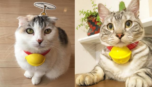 """【試してみたい】ハッピーセットを猫につけると→ """"リアルねこ型ロボット"""" になれると話題♡"""