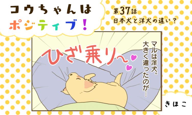 【まんが】第37話:【日本犬と洋犬の違い?】まんが描き下ろし連載♪ コウちゃんはポジティブ!