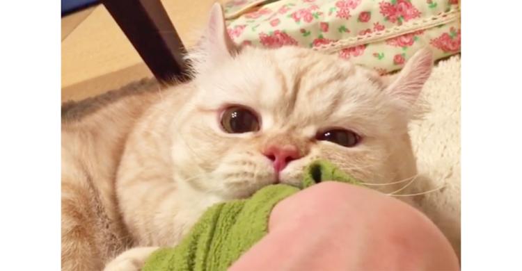 【離れない、離さにゃい♡ 】ママの袖口をつかまえて抱きしめる猫…その甘えっぷりに恋しそう(´3` )