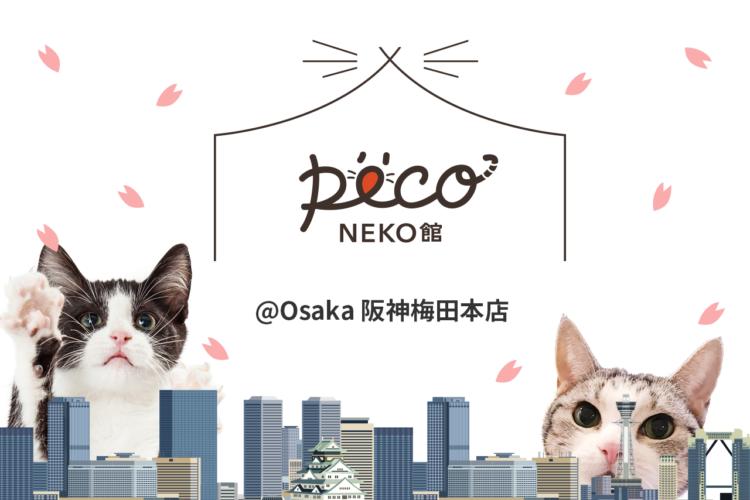 【猫好き必見♪】PECO NECO館が大阪に初上陸!!