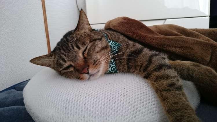 気持ちよすぎてペットも虜に?〝睡眠用たわし〟のすすめ