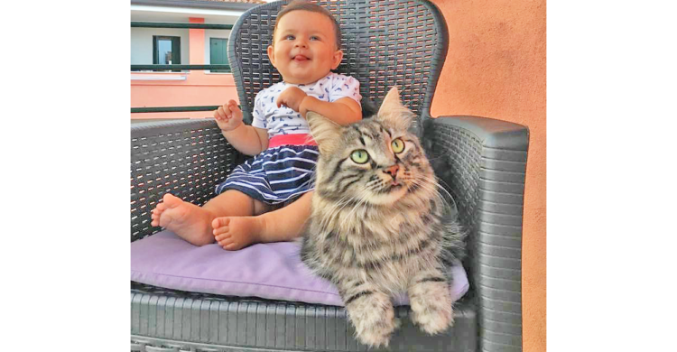 【赤ちゃんが生まれて、兄になった猫】ニャンコと赤ちゃんの仲良しな様子にホッコリする ♡ (8枚)