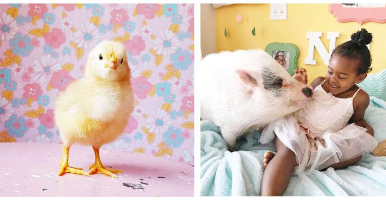 【カラフルな家の住人たち】人と動物が仲良く暮らすドリームランド。とってもかわいい画像集…♡(9枚)