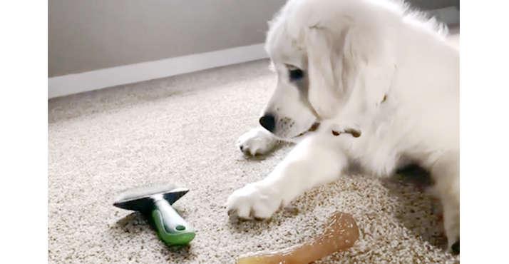 【あれもこれもオモチャ♡】ブラシで遊びだした子犬→ でもやはり、オモチャにはならなくて…(´Д`*)