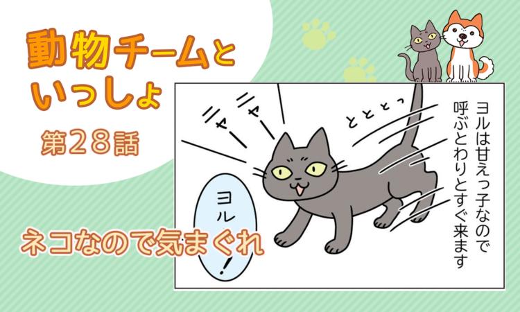 第28話:ネコなので気まぐれ