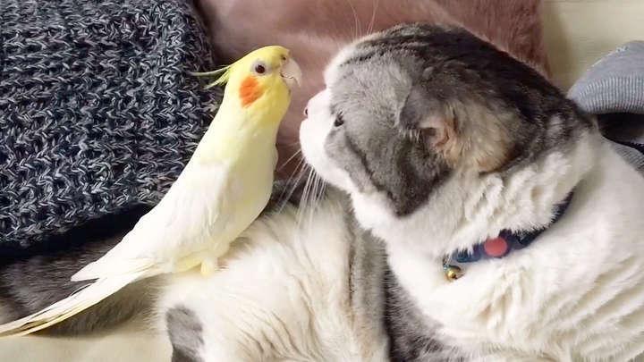 【見つめ合う…♡】ニャンコと鳥さんは仲良しさん! 意外な組み合わせに、ほっこりが止まらなーい♡