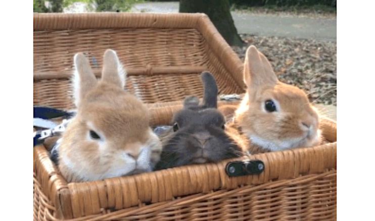 日光浴を楽しむ、ウサギたちのお鼻にご注目!ずっと見つめていたい癒やしの25秒間…(*´ω`*)♡