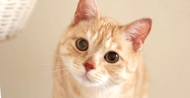 「福」と名付けられた、1匹の元野良ネコ。ハンディをのりこえ、『家族と共に生きる姿』に胸を打たれる