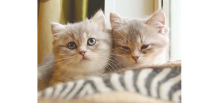 【突然スイッチON! 】ネムネムから一転…ハンターモードになる子猫ちゃんが、気になりすぎる♡(笑)