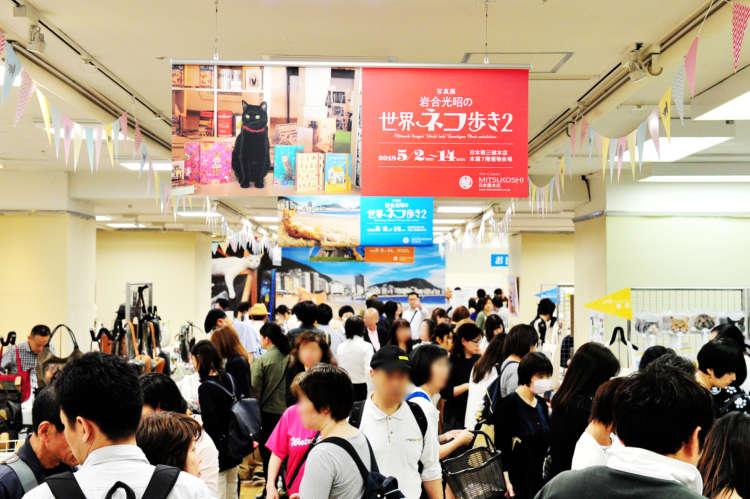 日本橋三越本店「ねこ・猫・ネコまつり」レポート! 写真展開催中の岩合さんにPECOが独占インタビュー