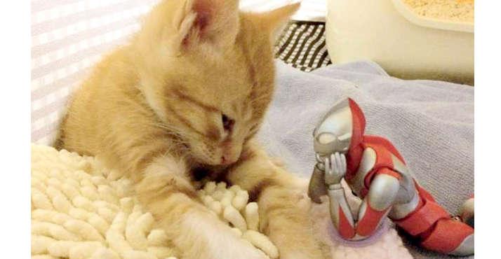 【いつもそばに】保護された子猫。すくすくと育つ傍らにはいつも『あのヒーロー』の姿があった♡ 11枚