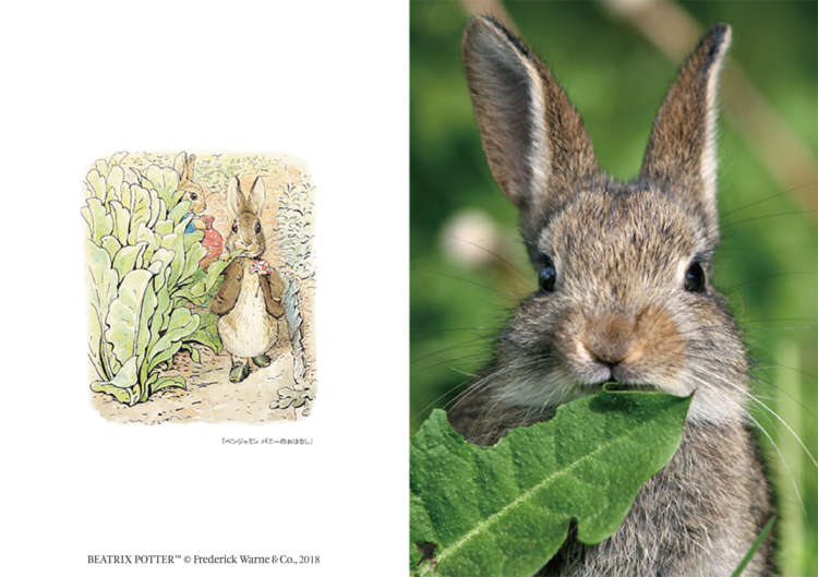 絵本の世界から抜け出てきたよう…♡ のびのびと暮らす動物を撮影した「ピーターラビットと仲間たち」