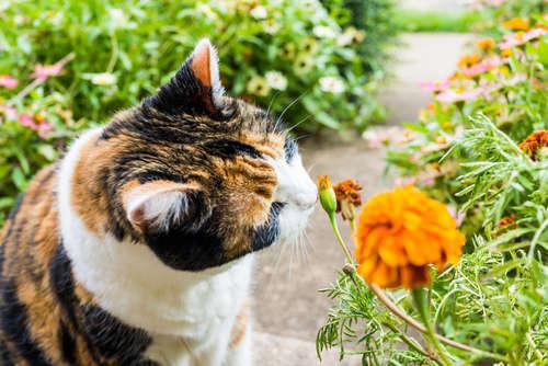 猫の甲状腺機能亢進症 考えられる原因や症状、治療法と予防法