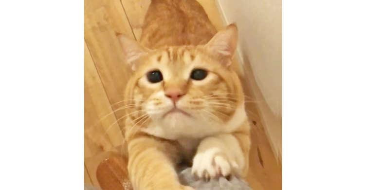 【こりゃたまらん…♪】ご飯が欲しいニャンコさん → 飼い主さんの足をよじ登ってアピールしてきたぞ♡