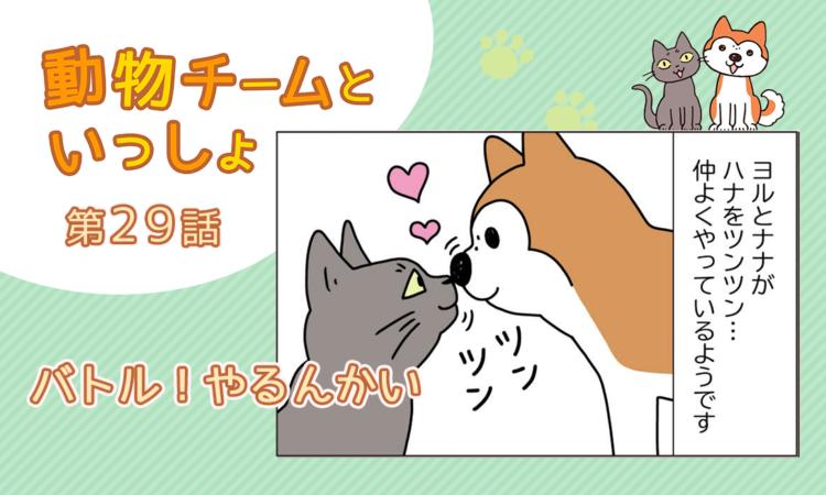 【まんが】第29話:【バトル!やるんかい】描き下ろし漫画♪「動物チームといっしょ」(著者:月田エミ)
