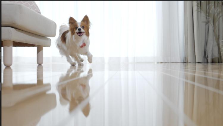 PECOスタジオも『愛犬の床』施工完了!楽しい撮影現場の基本は足元から!?