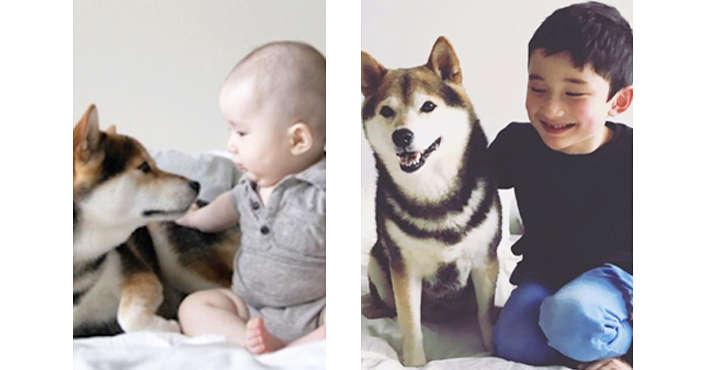 【一緒に成長していくふたり♪】柴犬と男の子の「あの頃と今」を比べたら… 深まった愛情にほっこり♡