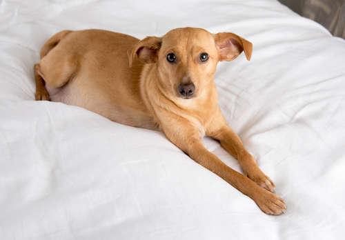 犬の条虫症で考えられる原因や症状、治療法と予防法