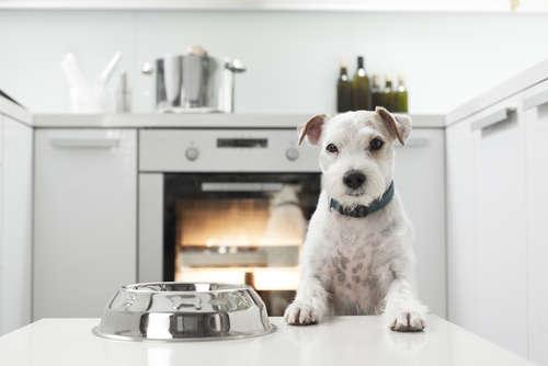 犬にレンコンを与えるメリットと注意点
