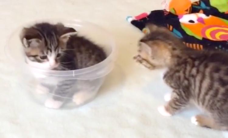「ボクも入るぅ〜!」ボウルに無理やり飛び込む子猫ちゃん。喧嘩がおきると思いきや、まさかの…♡