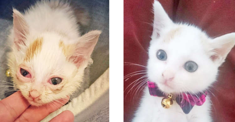 目の病気にかかり、なかなか里親が見つからなかった子猫 → 今ではたくさんの愛情に囲まれて…♡