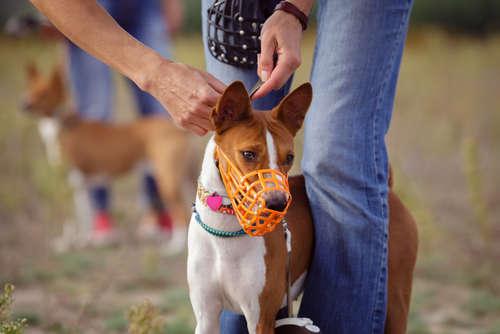犬の口輪の用途やメリット、選び方や注意点など