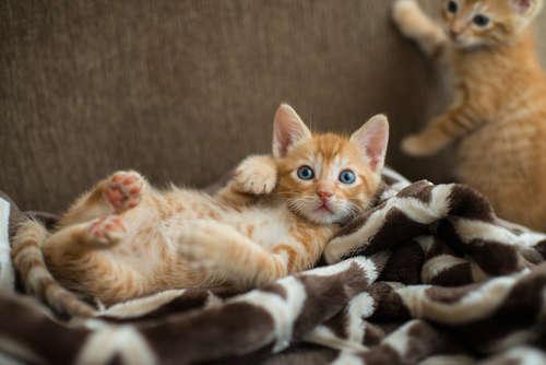 仔猫に起きる突然死の原因と予防法
