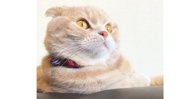 【遠い目をした猫】名前を呼んでも無視だけど…「お〜やつ♪」の言葉をきくと、いいリアクション♡