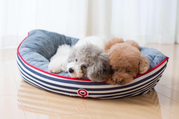 涼しそうな寝顔のワンちゃんたち。その秘密は2匹が眠る「ベッド」にあった!