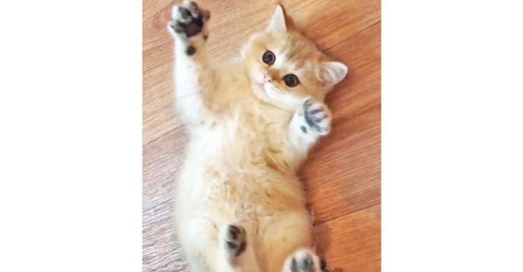 【くねくねが止まらない】お腹をわしゃわしゃされる子猫ちゃん♪ → 飼い主さんの手が離れると…♡