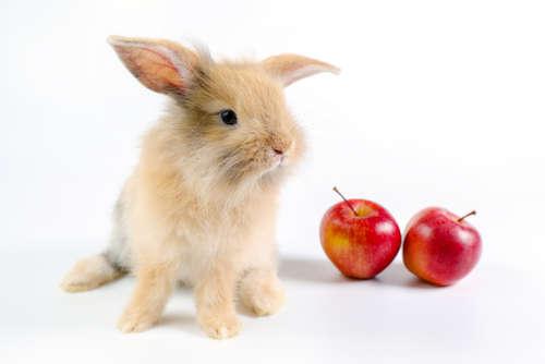 ウサギにリンゴを与えるのは控えましょう