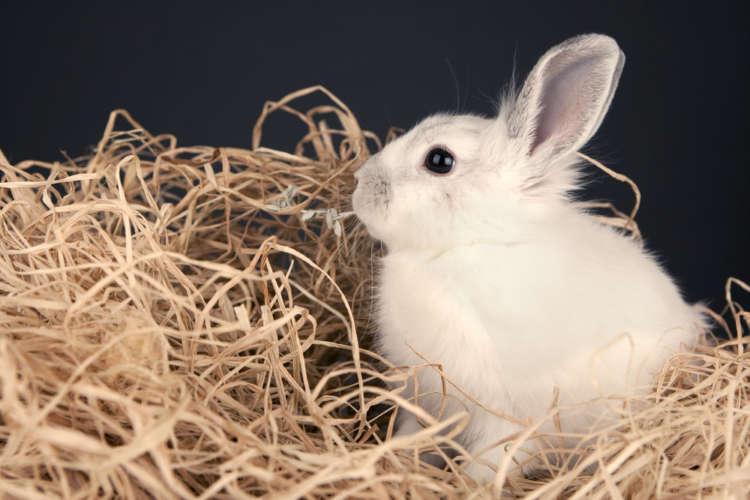 ウサギにほうれん草を与える際の注意点について