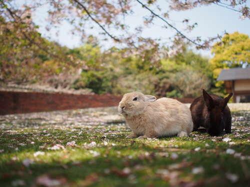 ウサギを放し飼いにしたい! その際の注意点について