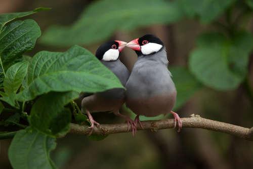 文鳥が卵を産んだ! 産卵時の対処法について