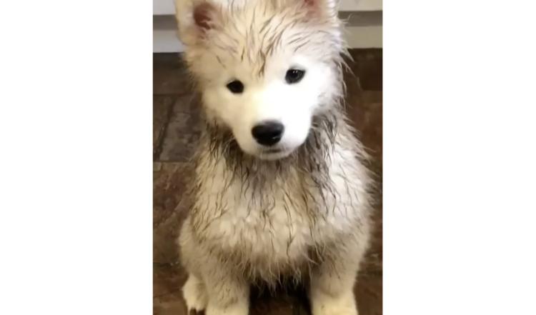 雨だけどまぁいっか。ドアを開けておいたら…2匹の子犬がいつの間にか、泥だらけになっていた♡(笑)