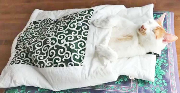 【猫だって朝は眠いのだ】お布団の中でスヤスヤ眠るニャンコさん。そろそろ起きる時間だけど…(*´ω`)